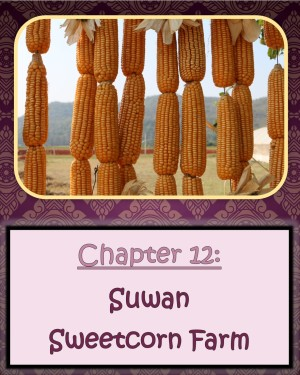 12 Suwan Sweetcorn Farm