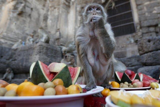 Monkey Buffet monkey